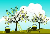 foto of hand-barrow  - vector hand barrow with basket of pears in pear orchard - JPG