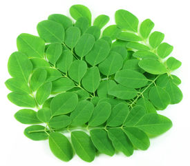 stock photo of malunggay  - Close up of edible moringa leaves over white background - JPG