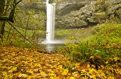 picture of sate  - Beautiful Silver Falls in Fall Color at Silver Falls Sate Park - JPG