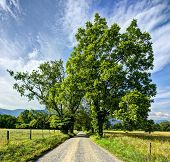 stock photo of gatlinburg  - Sparks Lane in Cades Cove near Gatlinburg - JPG