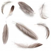 Collage of fluffy feathers isolated on white