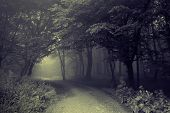 image of spooky  - Road going trough a dark spooky forest with fog - JPG