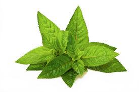 picture of peppermint  - Peppermint Leaves isolated on a white background - JPG