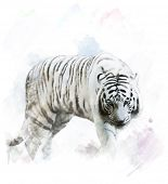 image of white-tiger  - Watercolor Digital Painting Of White Tiger Portrait - JPG
