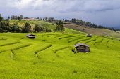 picture of bong  - Green Terraced Rice Field at Ban Pa Bong Peay in Chiangmai - JPG