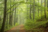 stock photo of rainy season  - Path through early autumn forest on a foggy - JPG