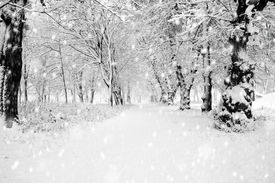 picture of winter trees  - Panorama of winter forest with trees covered snow - JPG