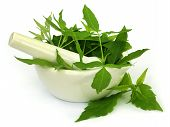image of pestle  - Medicinal Nishinda leaves with mortar and pestle over white background - JPG