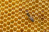 image of swarm  - bees swarming on a honeycomb - JPG
