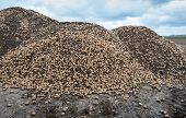 image of solanum tuberosum  - Big heap of previously unharvested potatoes from the previous crop season is mixed with lumps of clay at the edge of the farmland after preparing of the field in the spring for the next growing - JPG