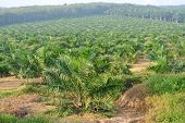 stock photo of palm  - SENDAYAN - JPG