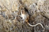 picture of macaque  - Monkey beach - JPG