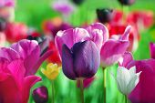 pic of may-flower  - beautiful spring flowers - JPG