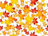 picture of fall leaves  - Seamless tile background of falling Autumn leaves - JPG