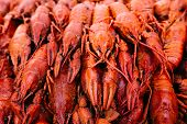 Large Boiled Red Crawfish, Cancers To Beer, Boiled Crawfish, Beer Snacks, Sea Crayfish, Beer With Cr poster