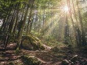 Scenic Landscape With Warm Sunrays Shining Through The Foliage Of A Deciduous Forest Up In The Mount poster