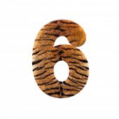Tiger number 6 - 3d Feline fur digit isolated on white background. This alphabet is perfect for crea poster