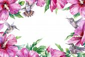 Watercolor Painting. Hand Drawn Flying Humming Birds And Pink Flower On White Background. Floral Hor poster