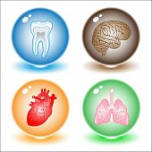 Vector medical icons. Other medical icons you can see in my portfolio.