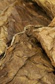pic of tobaco leaf  - Dried tobacco leaves fine details closeup studio shot - JPG