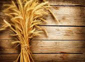 pic of earings  - Wheat Ears on the Wooden Table - JPG
