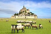 The Mont Saint Michel abbey.