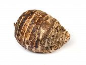 stock photo of taro corms  - taro root isolated on white background . ** Note: Shallow depth of field - JPG