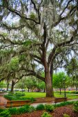 stock photo of tillandsia  - Park benches line the historic squares of Savannah - JPG