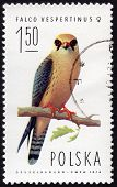 Polish Stamp Depicting A Falco Vespertinus