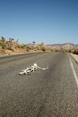 image of sternum  - A lost hiker dies of thirst on a deserted desert road inches away from a bottle of water - JPG