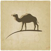 stock photo of hump  - camel old background  - JPG