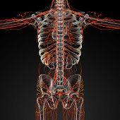image of plexus  - 3d render illustration of the male nerves  - JPG