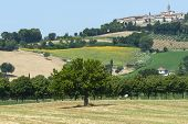 picture of pergola  - Country landscape between Mondavio and Pergola  - JPG