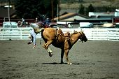 stock photo of bucking bronco  - pro rodeo bronc rider on his way to the dirt after being bucked of bronco - JPG