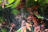 foto of spider web  - close up of the spider  - JPG