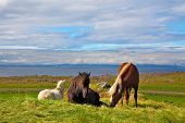 picture of iceland farm  - Iceland in the summer - JPG