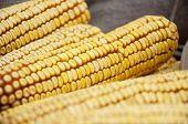 pic of maize  - Corn fruit - JPG