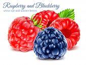 pic of blackberries  - Ripe raspberries and blackberry - JPG