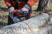 image of man chainsaw  - Closeup of chainsawing a tree trunk with a chain saw - JPG