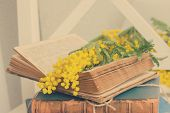 stock photo of vintage antique book  - open  vintage old book  with french mimosa flowers - JPG