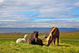 foto of iceland farm  - Iceland in the summer - JPG