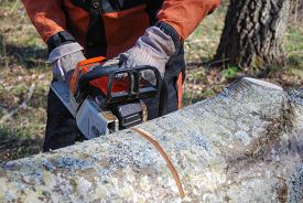 picture of man chainsaw  - Closeup of chainsawing a tree trunk with a chain saw - JPG