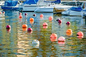 stock photo of anchor  - Lots of anchored floats serving as mooring buoys at a marina - JPG