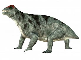 picture of herbivore  - Moschops was a primeval herbivorous dinosaur that lived in South Africa in the Permian Period - JPG