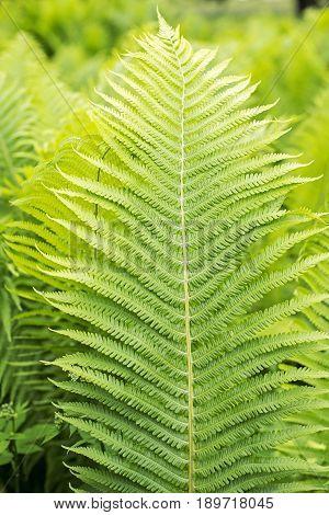 green ferns close
