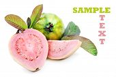 Fresh healthy pink guava fruit with leaves on a pure white background with space for text