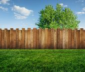 Spring Tree In Backyard And Wooden Garden Fence poster