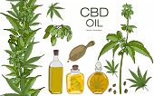 Vector Color Set Of Hand Drawn Hemp Elements. Cannabis Essential Oil.cbd. Oil Bottles, Branches, Lea poster
