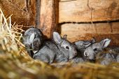 foto of rabbit hutch  - Young rabbits in a hutch  - JPG