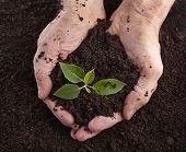 image of loam  - Hands holding sapling in soil surface - JPG